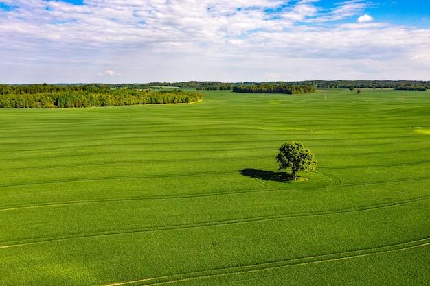 Vista de cima em uma árvore solitária com sombras em um campo verde e uma floresta ao fundo