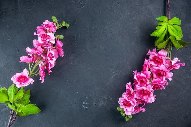 Vista de cima lindas flores rosa na superfície escura
