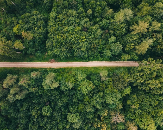 Vista de cima para baixo de uma trilha de caminhada pela floresta