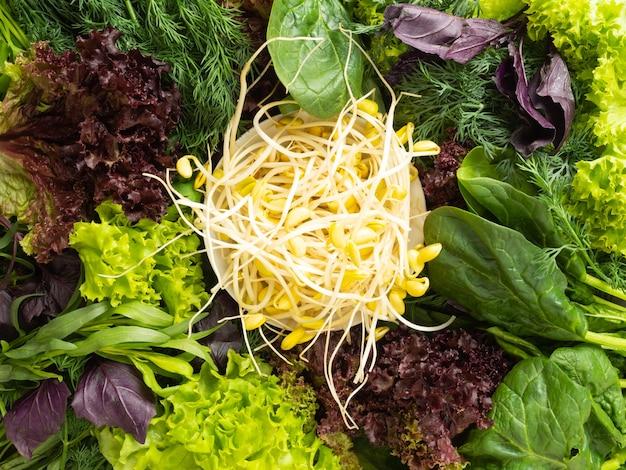 Vista de cima - várias ervas frescas comestíveis, verduras dispostas em um círculo, no centro estão mudas de soja