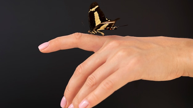 Vista de close-up de uma borboleta sentada por lado