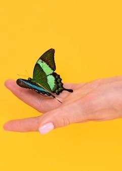 Vista de close-up de uma linda borboleta disponível