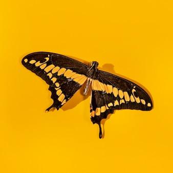 Vista de close-up do belo conceito de borboleta
