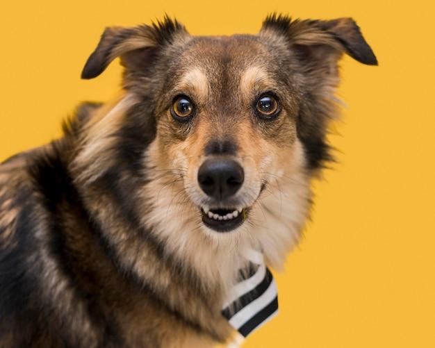 Vista de close-up do conceito de cachorro fofo