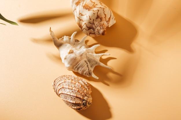 Vista de conchas em um fundo marrom