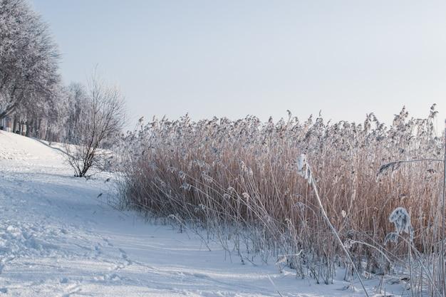 Vista de dia frio ensolarado congelado pelo rio e parque no inverno