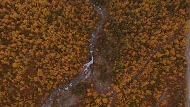 Vista de drone das árvores amareladas da paisagem de outono do rio