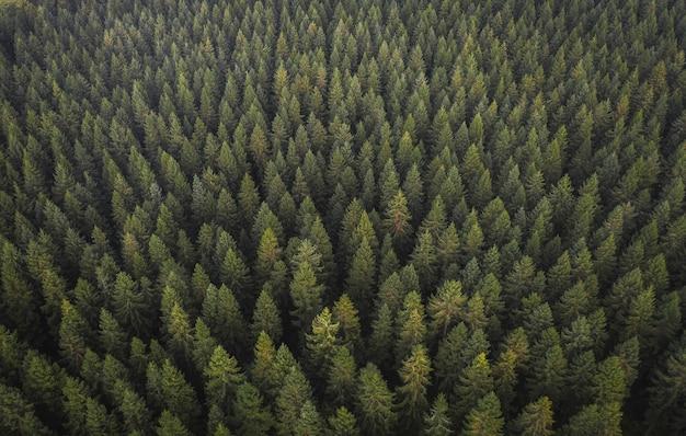 Vista de drone de floresta verde natural