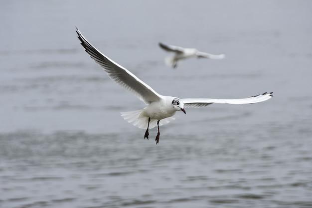 Vista de duas gaivotas voando sobre a água