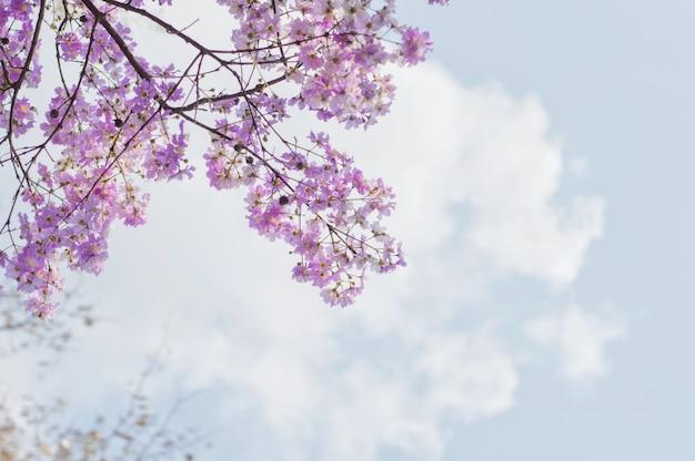 Vista, de, flor roxa, com, céu azul