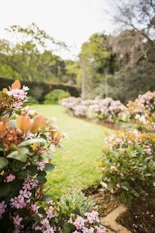 Vista, de, flores, em, a, jardim