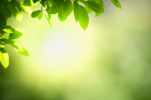 Vista de folha verde em fundo verde borrado sob a luz do sol