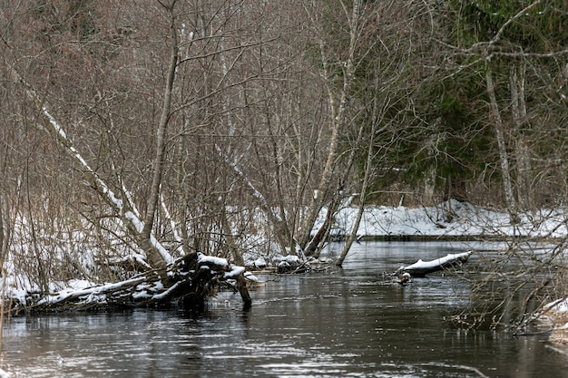 Vista de inverno do rio pequeno, paisagem de inverno com rio da floresta