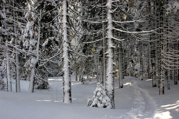 Vista de inverno em uma floresta montanhosa dos cárpatos
