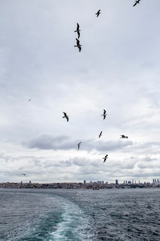 Vista de istambul de um navio em tempo nublado, gaivotas voando, ondas e espuma como um traço do barco, turquia