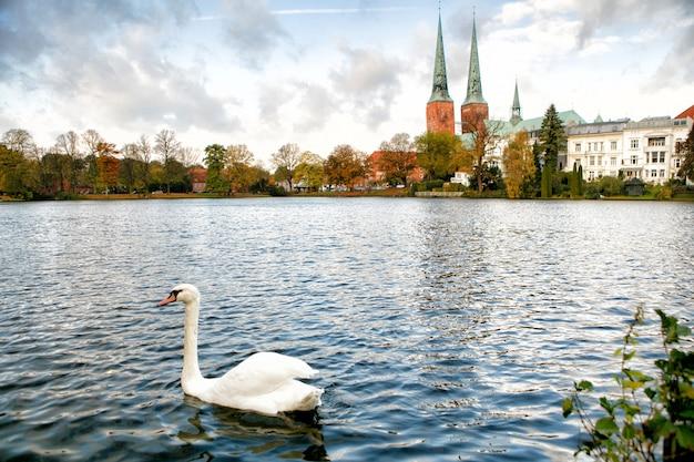 Vista de lübeck o cisne branco está nadando no lago.