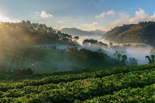 Vista, de, manhã, névoa, em, doi, ang, khang, chiang mai província, tailandia