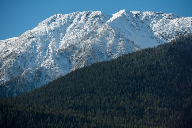 Vista de montanha coberta de neve e floresta verde