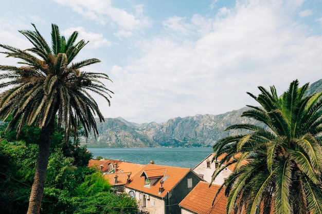 Vista de montenegro