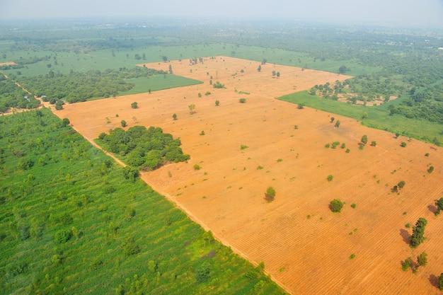 Vista de olho de pássaro do campo de arroz na tailândia