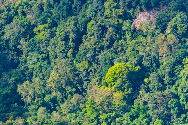 Vista de olhos de pássaro na floresta tropical tailândia
