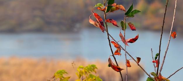 Vista de outono com folhas de outono coloridas em um galho de árvore à beira do rio em tempo nublado