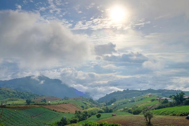 Vista de paisagem de floresta e montanha