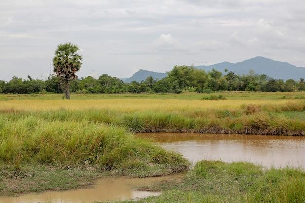 Vista, de, paisagem natureza, em, tailandia