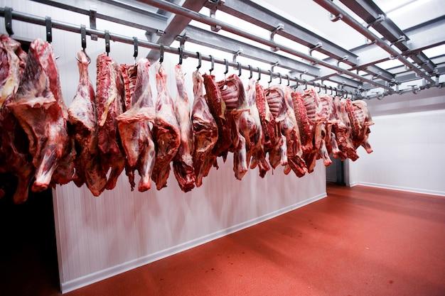 Vista de pedaços de meia vaca pendurados e dispostos em uma fileira em uma grande geladeira na fábrica de carne da geladeira.