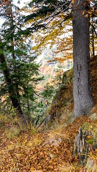 Vista, de, pedreira lespezi, romania, outono, dia