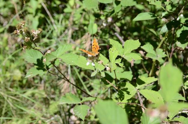 Vista de perto de uma borboleta em uma folha