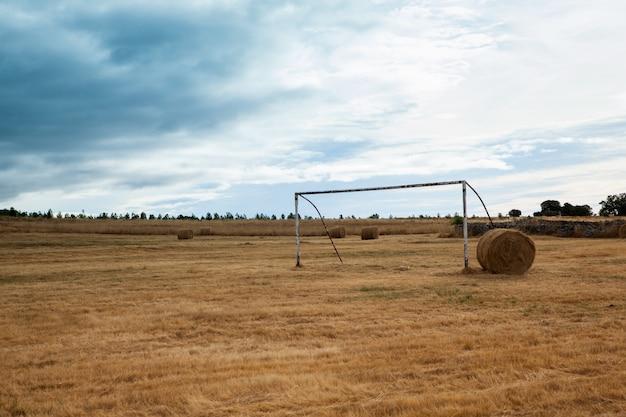 Vista, de, porta futebol, em, a, colheita, campo