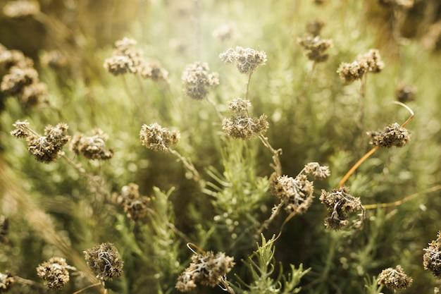 Vista, de, secos, flores, campo