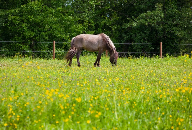 Vista de tarpan, cavalos selvagens