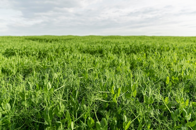 Vista de terras agrícolas de ângulo baixo