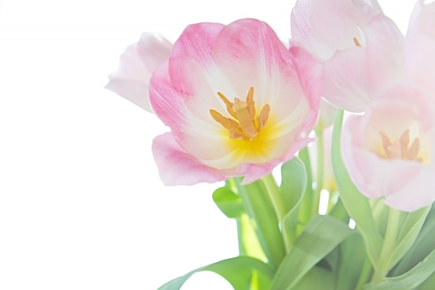 Vista de um buquê de tulipas em um fundo branco.