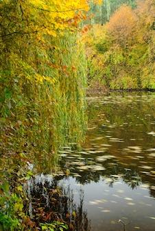 Vista de um lago banhado por luz dourada com um salgueiro-chorão em foco nítido em primeiro plano
