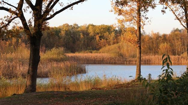Vista de um lago cercado por gramíneas secas e árvores na floresta durante o pôr do sol