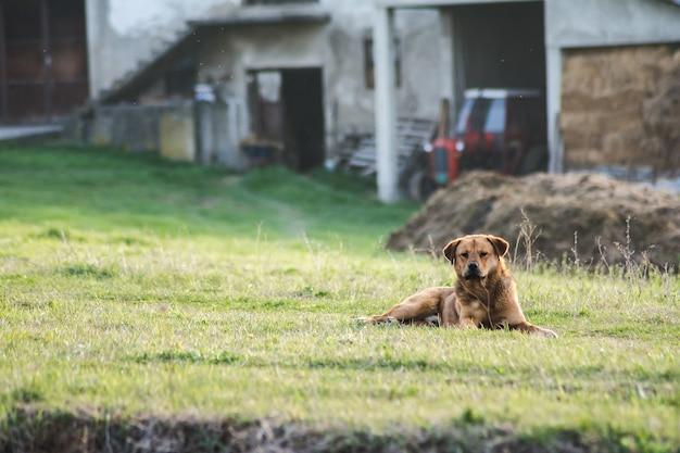 Vista de um lindo cachorro marrom sentado no jardim de uma casa, capturada em um dia ensolarado