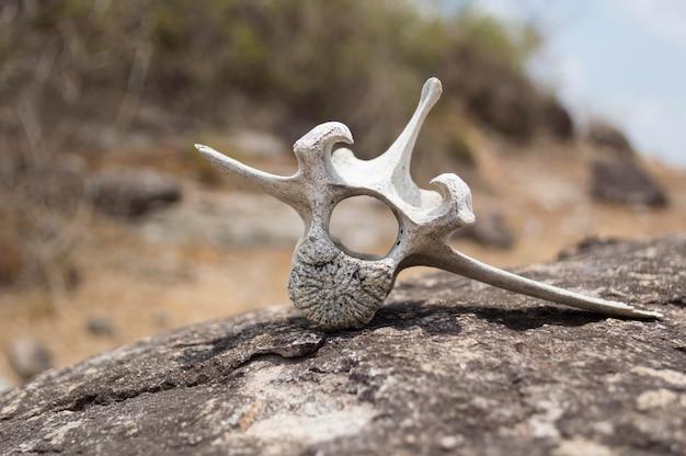 Vista de um osso branco seco de um animal colocado em uma rocha