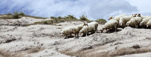Vista de um rebanho de ovelhas à beira de um penhasco