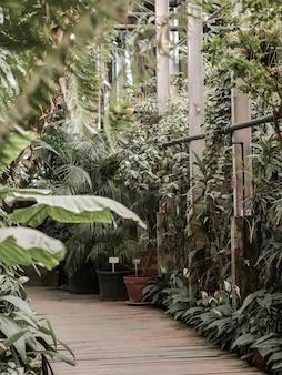 Vista de uma antiga estufa tropical com plantas perenes, palmeiras, lianas