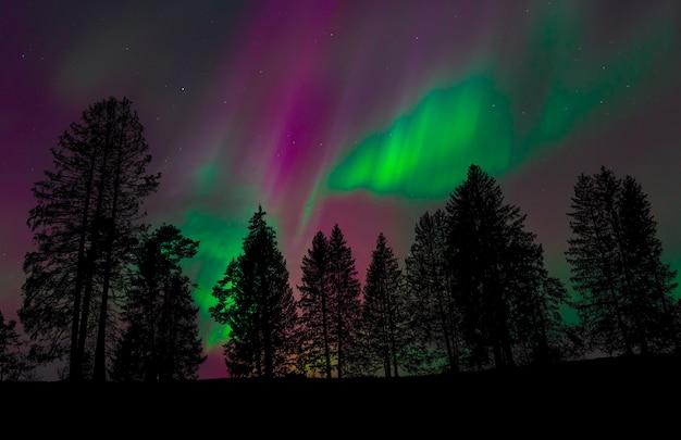 Vista de uma floresta com o céu noturno