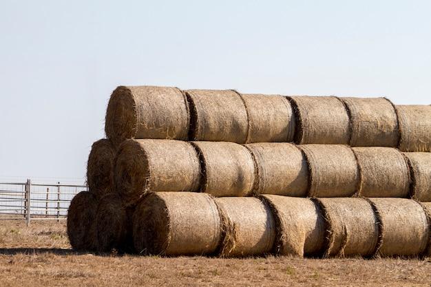 Vista de uma pilha de pacotes de feno no campo.