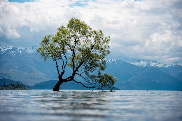 Vista de uma velha árvore em um lago com montanhas cobertas de neve em um dia nublado