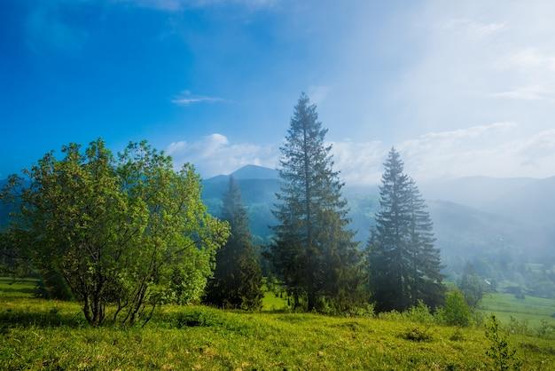 Vista deslumbrante de altos abetos crescendo em colinas verdes e montanhas em um dia ensolarado de nevoeiro e verão no fundo do céu azul