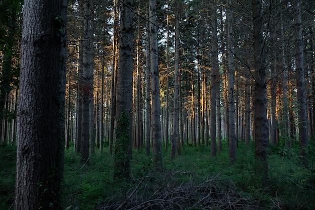 Vista deslumbrante de uma floresta incrível com muitas árvores