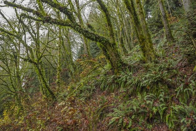 Vista deslumbrante do musgo coberto de árvores e plantas de samambaia no meio de uma floresta tropical