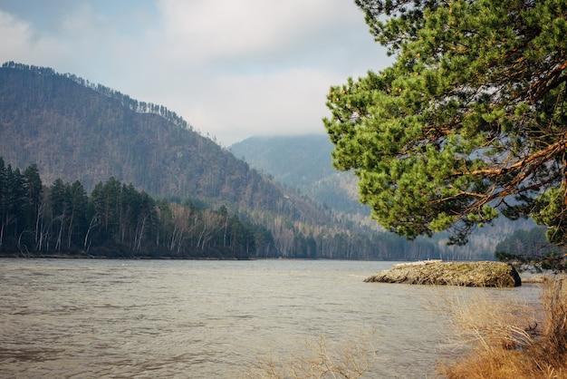 Vista deslumbrante do rio de montanha, colinas cobertas por floresta de coníferas em um dia ensolarado de primavera. no primeiro plano, um ramo de pinheiro verde viçoso se inclina em direção à água. fundo natural.