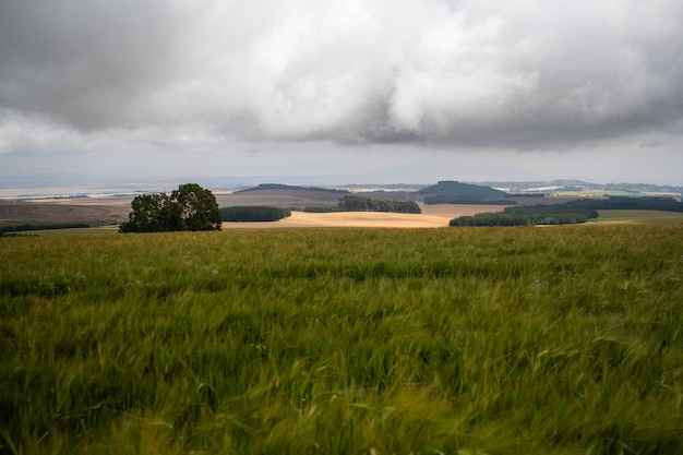 Vista deslumbrante sobre os campos gramados sob o céu nublado no monte quênia